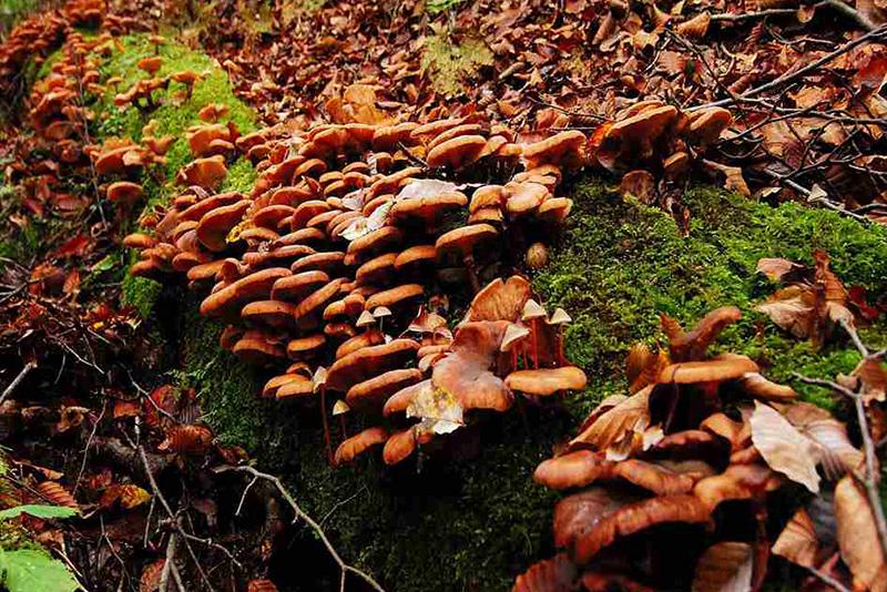 カヤノ平高原できのこ狩り。きのこ料理と新米に舌鼓! 第2回「信越自然郷おごっつぉガーデン」